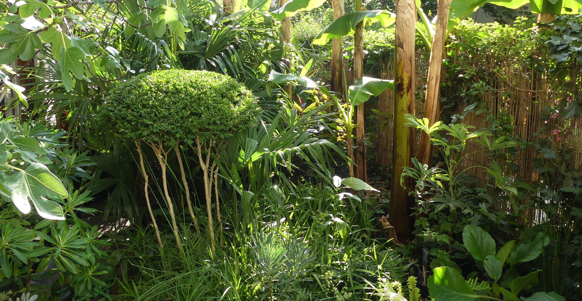 Jungle de poche ; Paris ; FORR - PAYSAGE   URBANISME ; FORR paysagiste